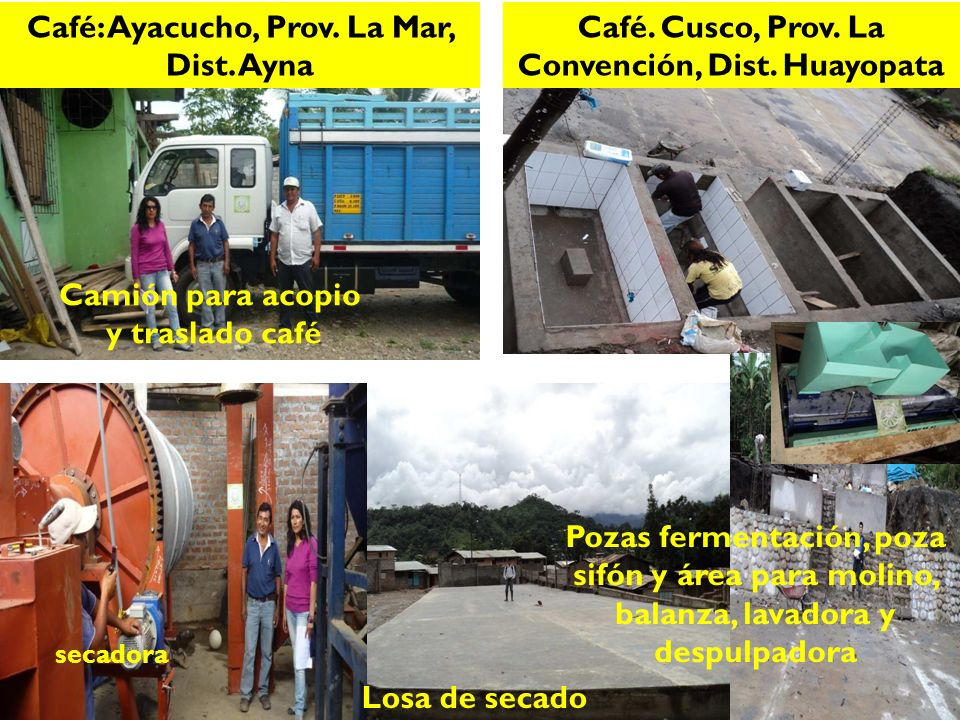 Café: Ayacucho, Prov.La Mar, Dist.