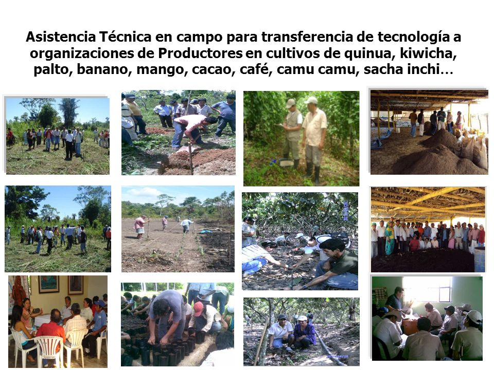 Asistencia Técnica en campo para transferencia de tecnología a organizaciones de Productores en cultivos de quinua, kiwicha, palto, banano, mango, cacao, café, camu camu, sacha inchi …