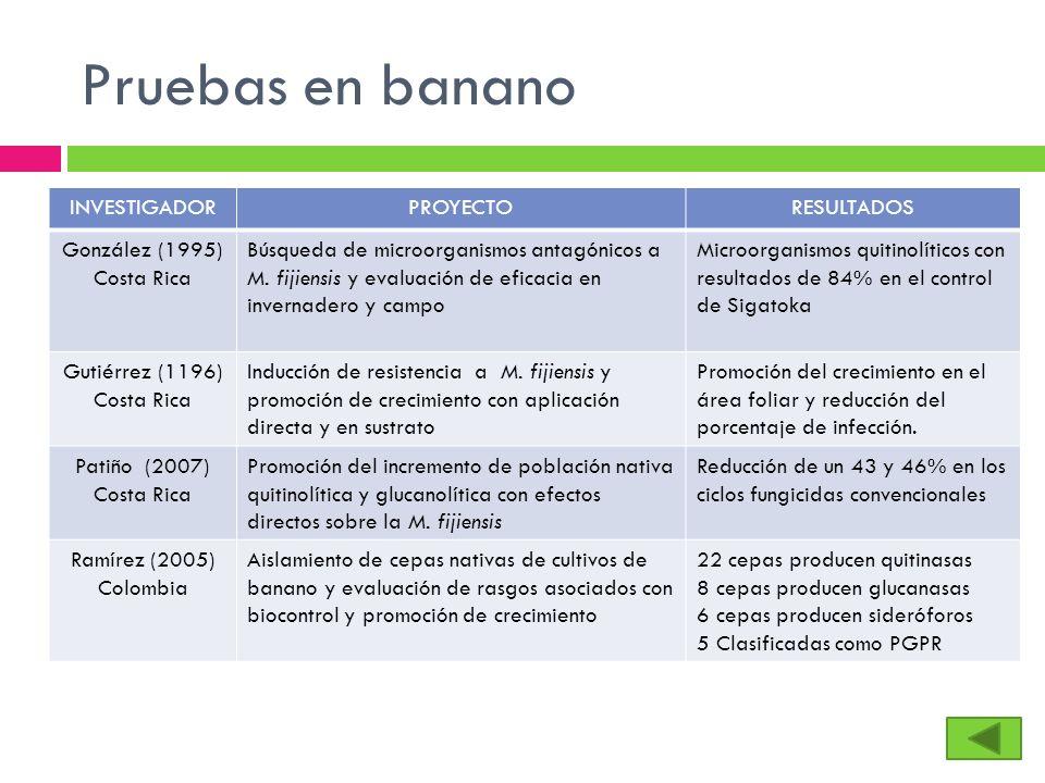 Pruebas en banano INVESTIGADORPROYECTORESULTADOS González (1995) Costa Rica Búsqueda de microorganismos antagónicos a M. fijiensis y evaluación de efi