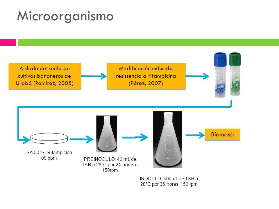 Microorganismo Aislado del suelo de cultivos bananeros de Urabá (Ramírez, 2005) Modificación inducida resistencia a rifampicina (Pérez, 2007) TSA 50 %