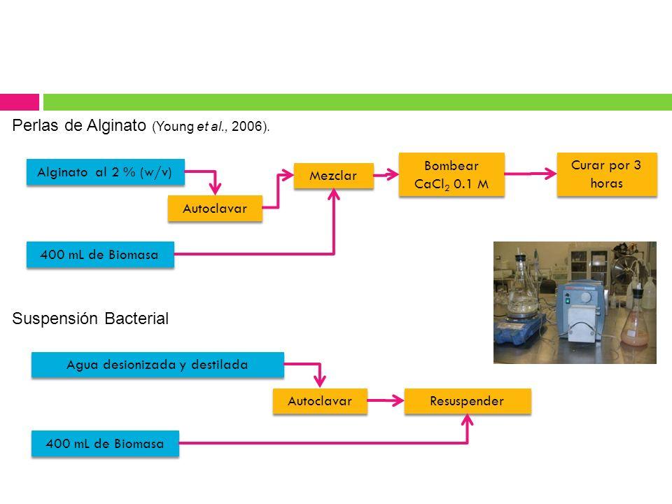 Perlas de Alginato (Young et al., 2006). Alginato al 2 % (w/v) Autoclavar 400 mL de Biomasa Mezclar Bombear CaCl 2 0.1 M Curar por 3 horas Suspensión