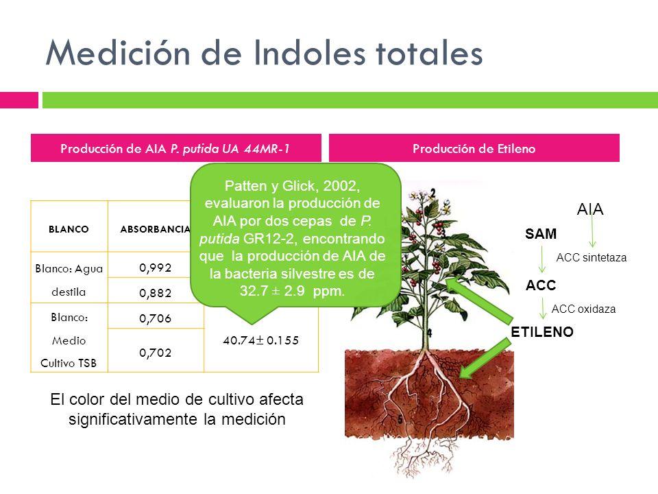 Medición de Indoles totales BLANCOABSORBANCIA CONCENTRACION ppm Blanco: Agua destila 0,992 54.71 ± 3.98 0,882 Blanco: Medio Cultivo TSB 0,706 40.74± 0