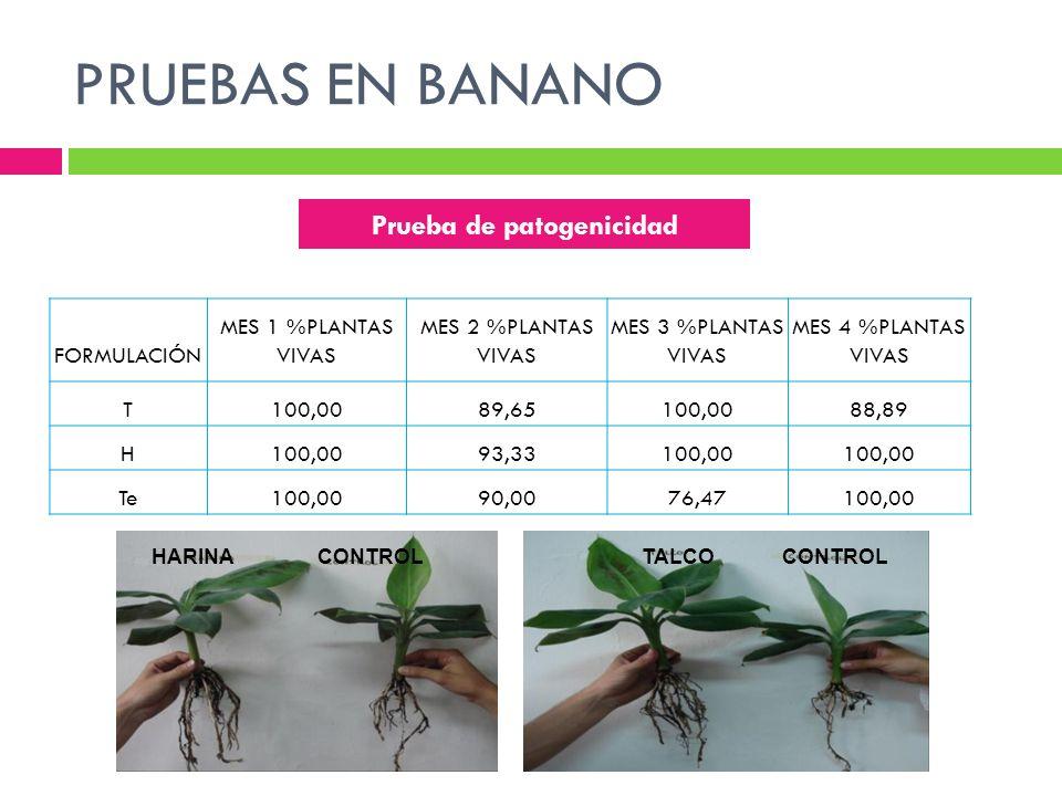 PRUEBAS EN BANANO FORMULACIÓN MES 1 %PLANTAS VIVAS MES 2 %PLANTAS VIVAS MES 3 %PLANTAS VIVAS MES 4 %PLANTAS VIVAS T100,0089,65100,0088,89 H100,0093,33