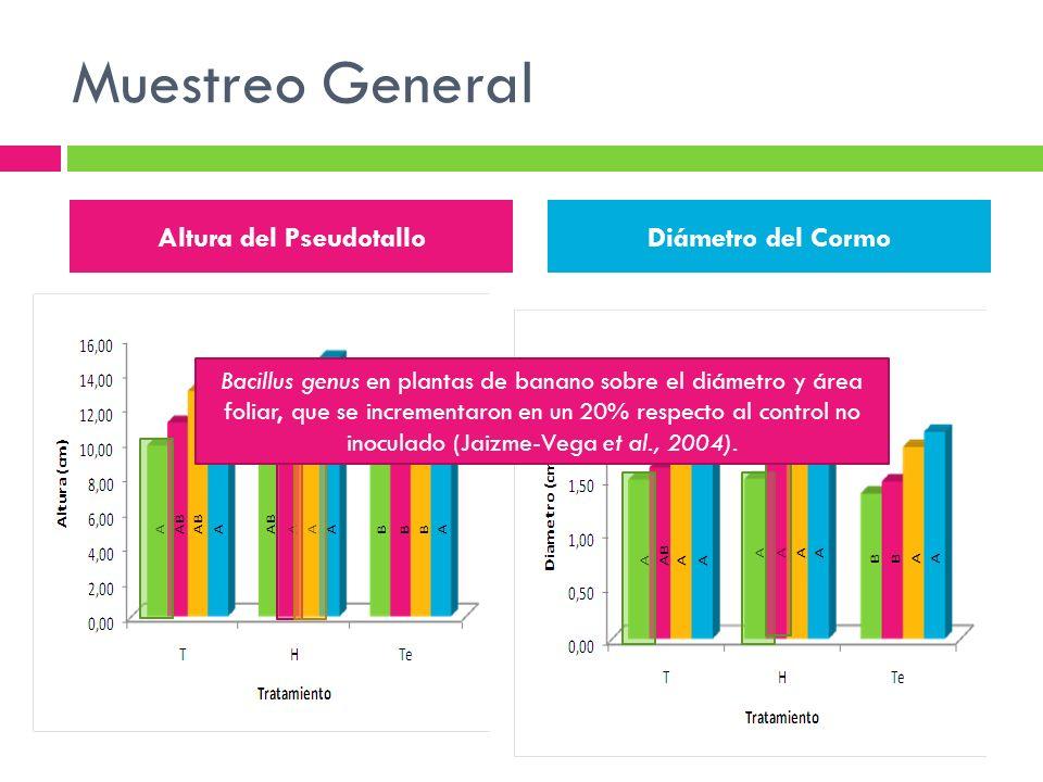 Muestreo General Altura del Pseudotallo Diámetro del Cormo Bacillus genus en plantas de banano sobre el diámetro y área foliar, que se incrementaron e