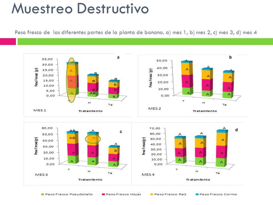 Peso fresco de las diferentes partes de la planta de banano. a) mes 1, b) mes 2, c) mes 3, d) mes 4 ab c d Muestreo Destructivo