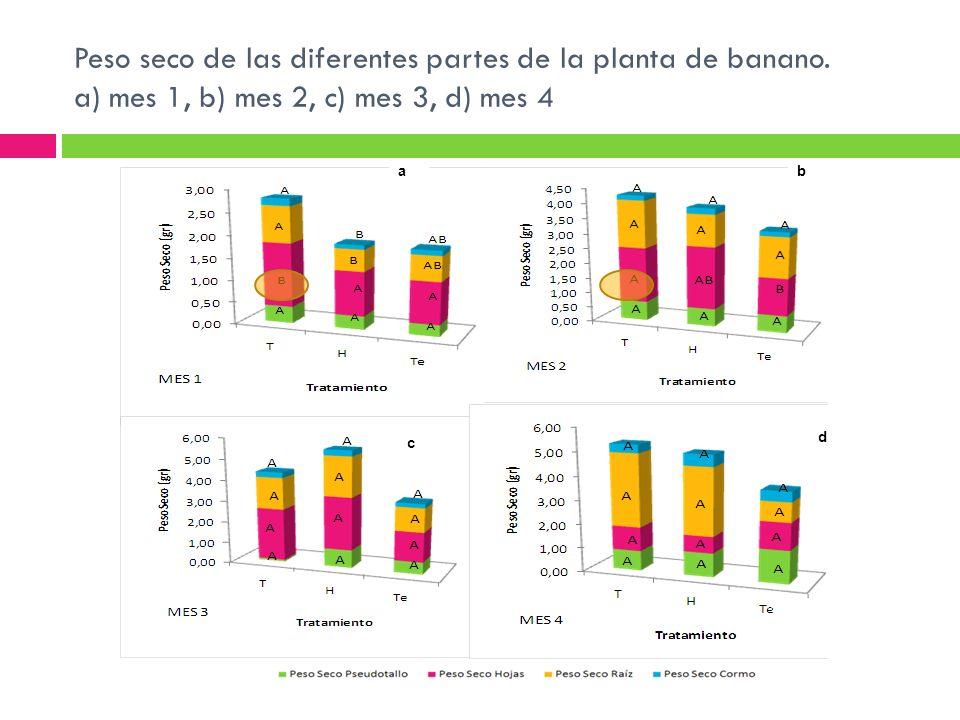 Peso seco de las diferentes partes de la planta de banano. a) mes 1, b) mes 2, c) mes 3, d) mes 4 ab c d