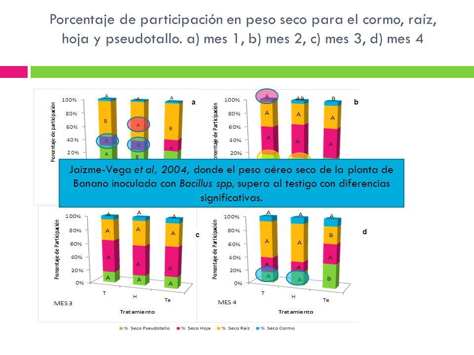 ab c d Porcentaje de participación en peso seco para el cormo, raíz, hoja y pseudotallo. a) mes 1, b) mes 2, c) mes 3, d) mes 4 Jaizme-Vega et al, 200