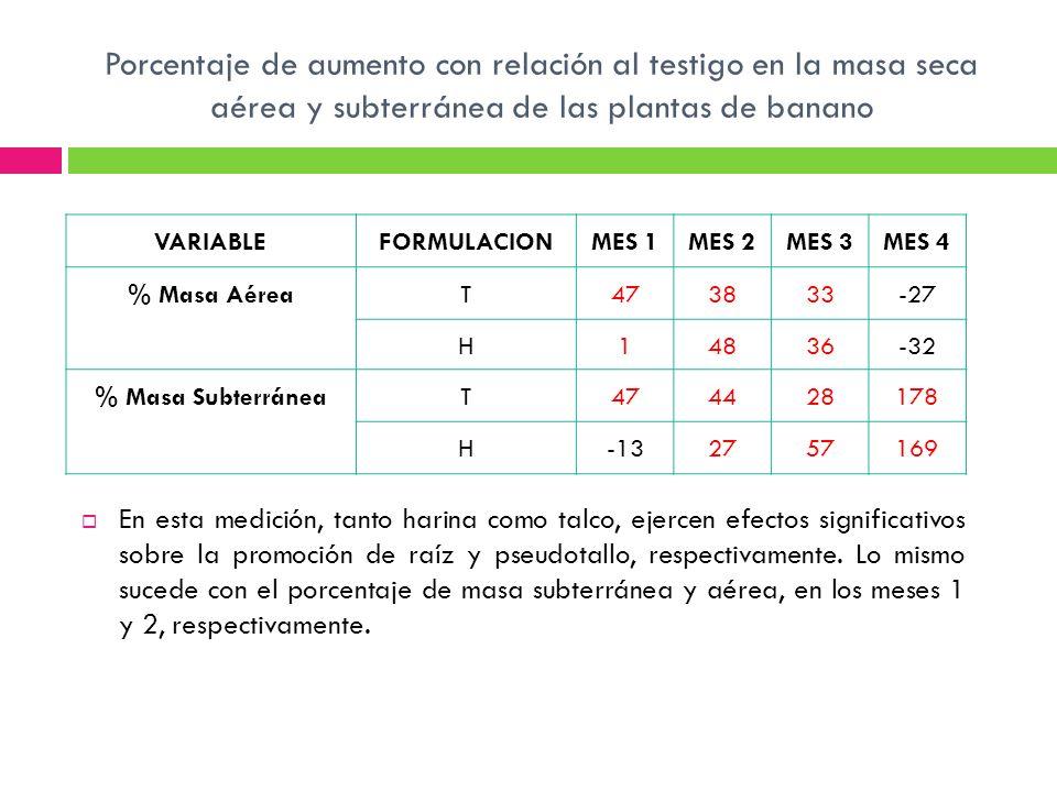 Porcentaje de aumento con relación al testigo en la masa seca aérea y subterránea de las plantas de banano En esta medición, tanto harina como talco,