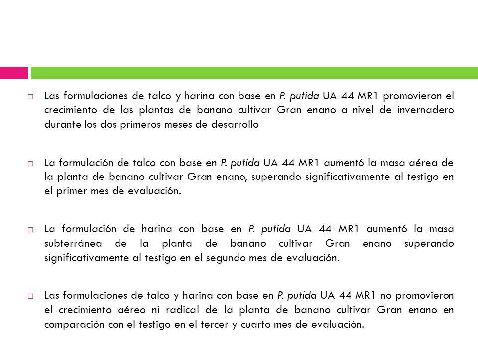Las formulaciones de talco y harina con base en P. putida UA 44 MR1 promovieron el crecimiento de las plantas de banano cultivar Gran enano a nivel de