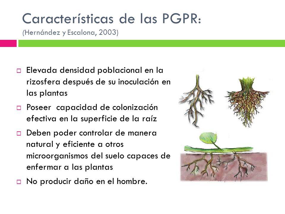 Características de las PGPR : (Hernández y Escalona, 2003) Elevada densidad poblacional en la rizosfera después de su inoculación en las plantas Posee
