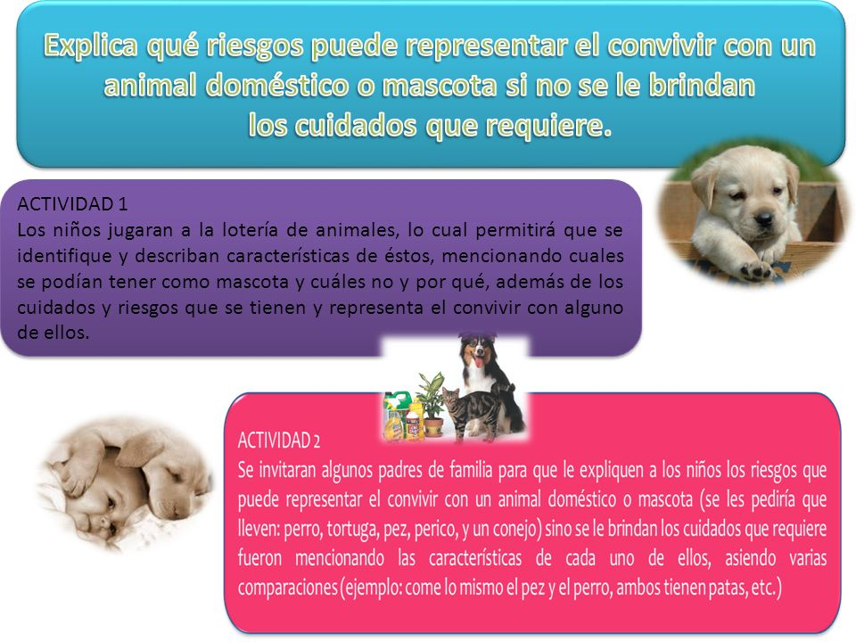 ACTIVIDAD 1 Los niños jugaran a la lotería de animales, lo cual permitirá que se identifique y describan características de éstos, mencionando cuales se podían tener como mascota y cuáles no y por qué, además de los cuidados y riesgos que se tienen y representa el convivir con alguno de ellos.