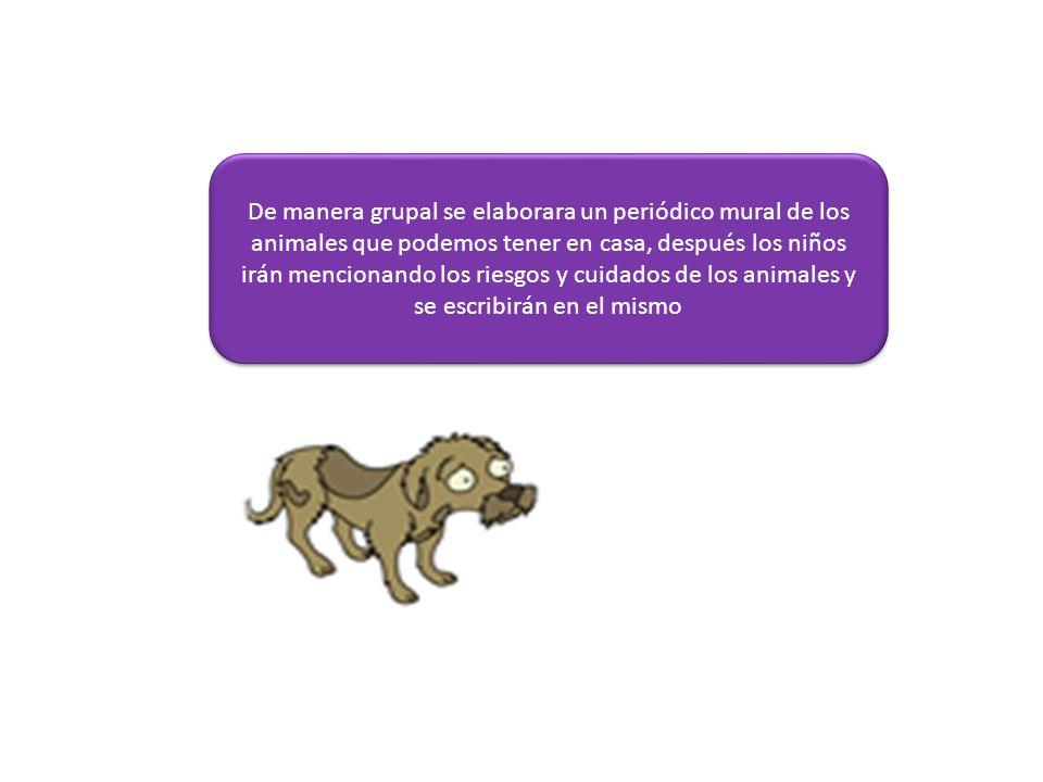 De manera grupal se elaborara un periódico mural de los animales que podemos tener en casa, después los niños irán mencionando los riesgos y cuidados de los animales y se escribirán en el mismo