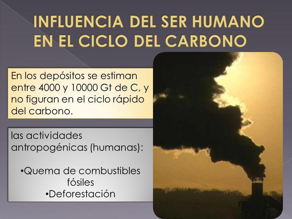 las actividades antropogénicas (humanas): Quema de combustibles fósiles Deforestación las actividades antropogénicas (humanas): Quema de combustibles