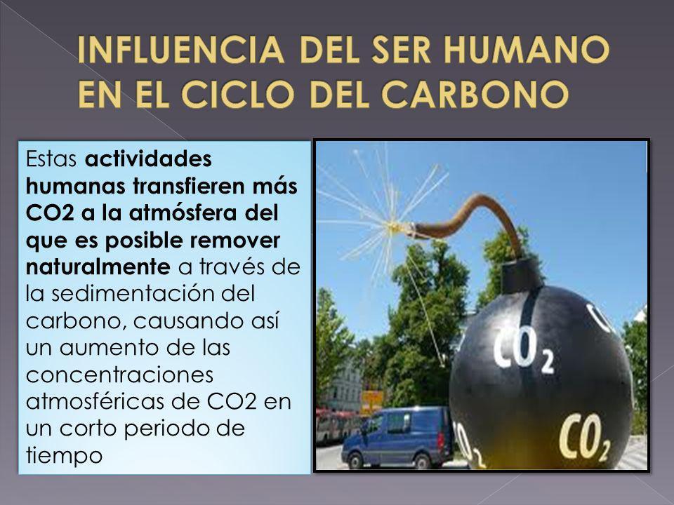 Estas actividades humanas transfieren más CO2 a la atmósfera del que es posible remover naturalmente a través de la sedimentación del carbono, causand