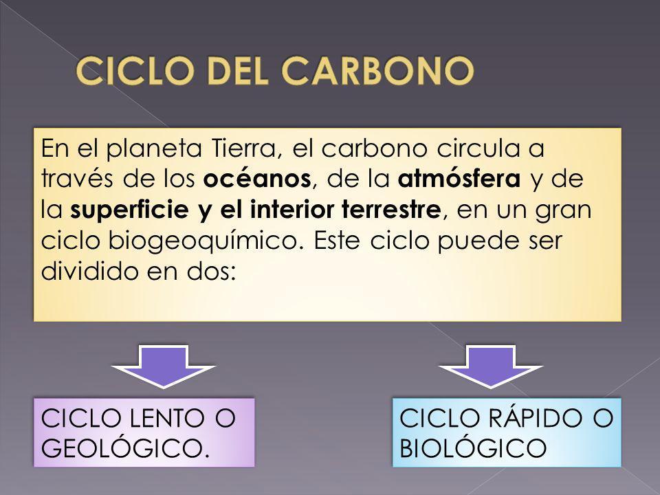 CICLO LENTO O GEOLÓGICO. CICLO RÁPIDO O BIOLÓGICO En el planeta Tierra, el carbono circula a través de los océanos, de la atmósfera y de la superficie