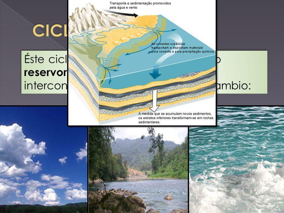 Éste ciclo está constituido por cuatro reservorios principales de carbono interconectados por rutas de intercambio:
