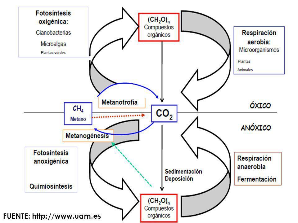 Hace 200 años, la concentración de CO2 atmosférico se situaba en los 280 ppmv.