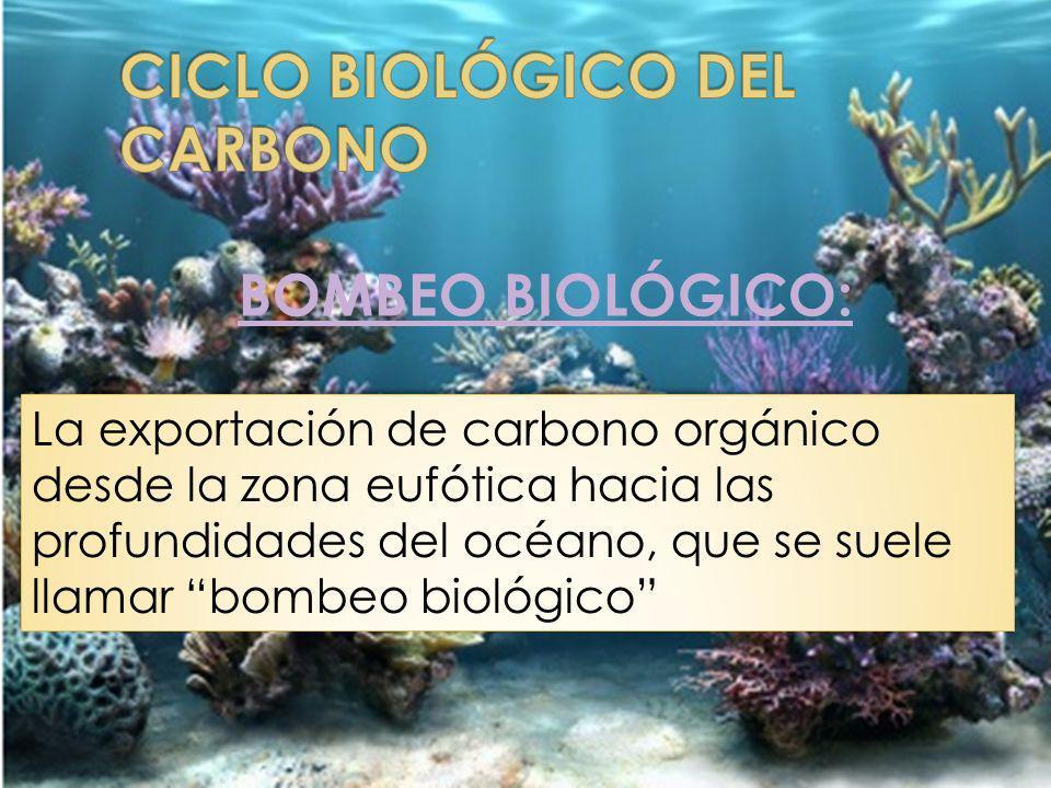 BOMBEO BIOLÓGICO: La exportación de carbono orgánico desde la zona eufótica hacia las profundidades del océano, que se suele llamar bombeo biológico