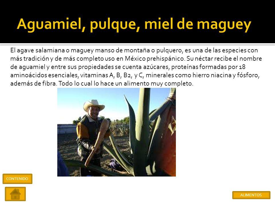 El amaranto y huazontle pertenecientes a la misma familia, fueron de suma relevancia en el cultivo y alimentación del México prehispánico, ocupando en