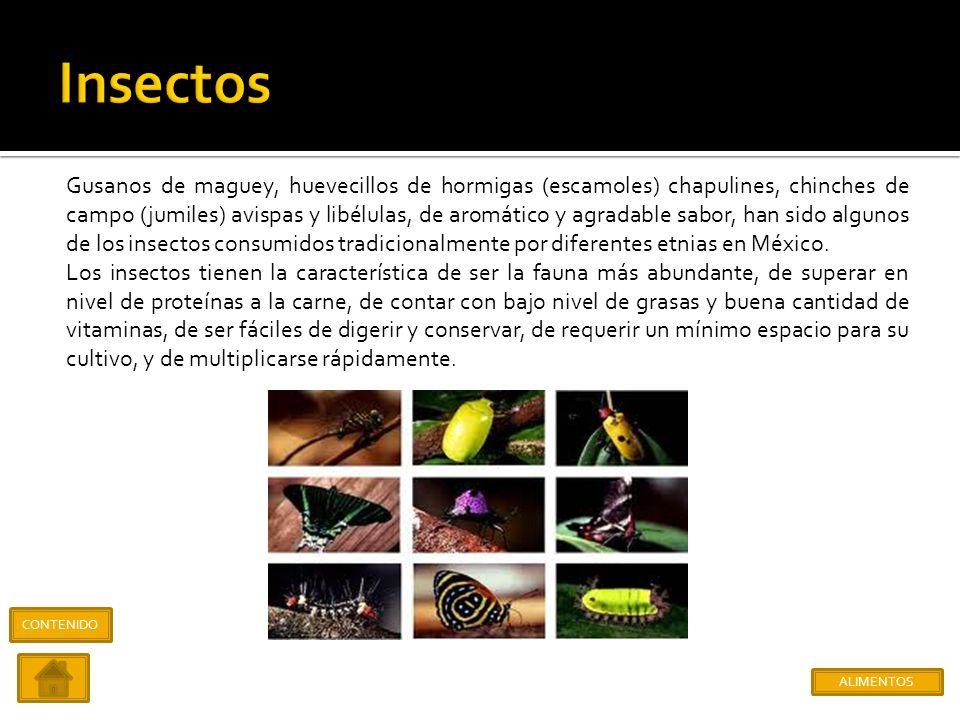 El agave salamiana o maguey manso de montaña o pulquero, es una de las especies con más tradición y de más completo uso en México prehispánico. Su néc