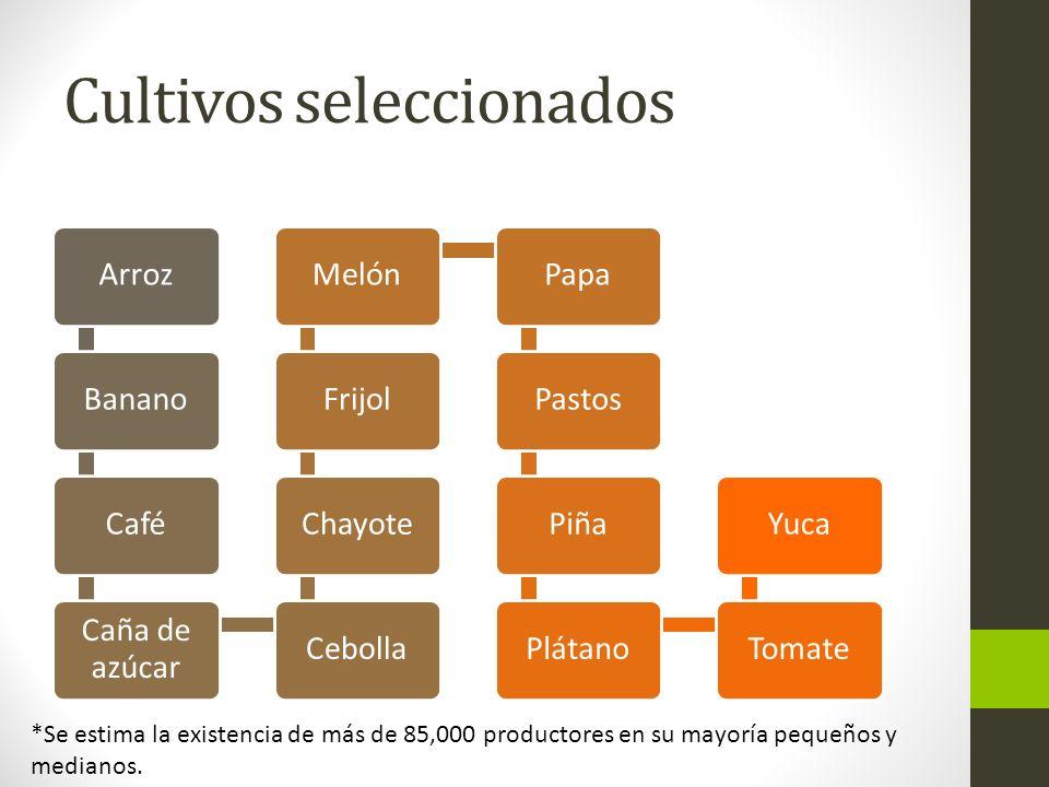 Cultivos seleccionados ArrozBananoCafé Caña de azúcar CebollaChayoteFrijolMelónPapaPastosPiñaPlátanoTomateYuca *Se estima la existencia de más de 85,0