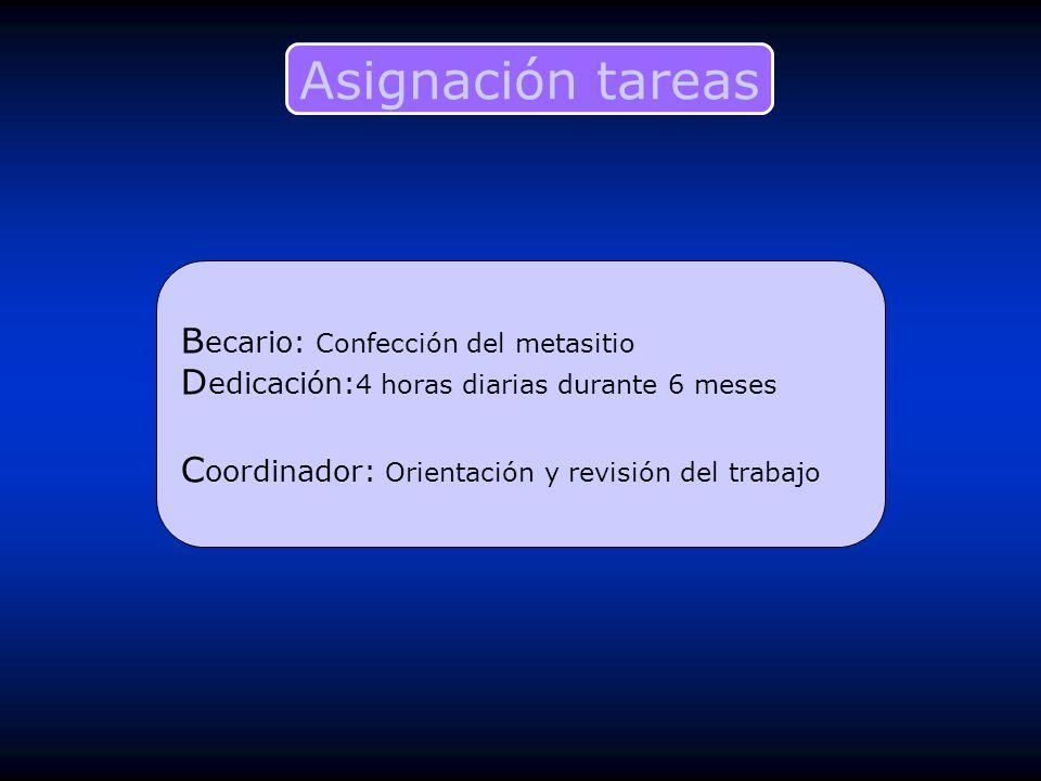 B ecario: Confección del metasitio D edicación: 4 horas diarias durante 6 meses C oordinador: Orientación y revisión del trabajo Asignación tareas