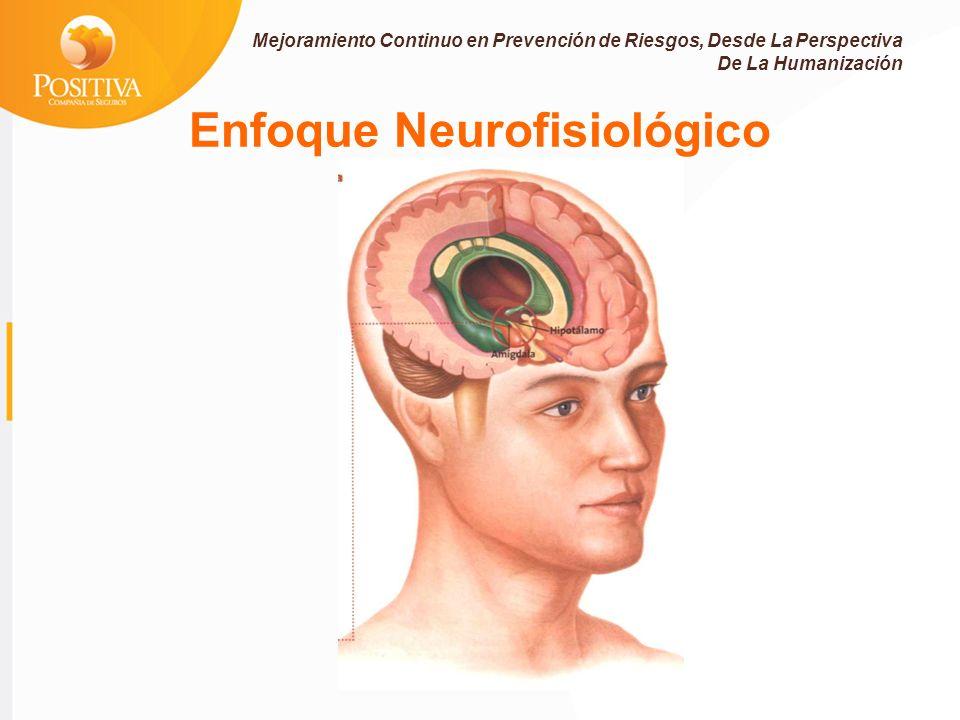 Enfoque Neurofisiológico Mejoramiento Continuo en Prevención de Riesgos, Desde La Perspectiva De La Humanización