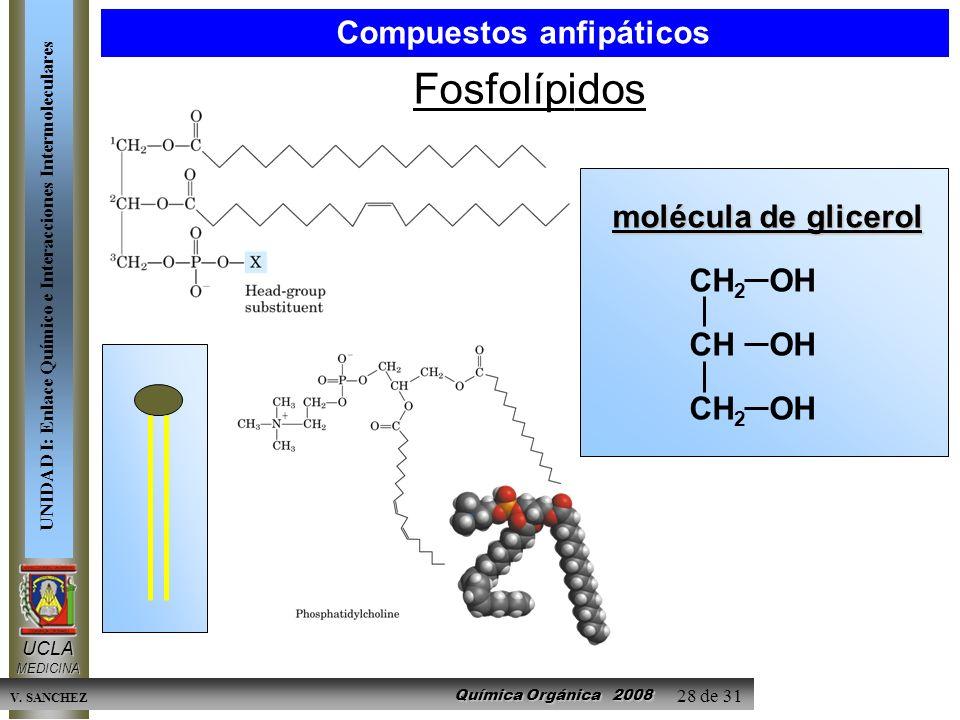 Química Orgánica 2008 UCLAMEDICINA UNIDAD I: Enlace Químico e Interacciones Intermoleculares V. SANCHEZ 28 de 31 Fosfolípidos molécula de glicerol CH