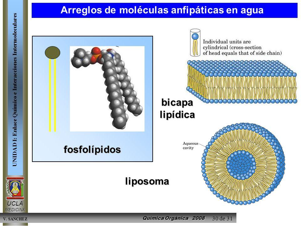 Química Orgánica 2008 UCLAMEDICINA UNIDAD I: Enlace Químico e Interacciones Intermoleculares V. SANCHEZ 30 de 31 fosfolípidos bicapa lipídica liposoma