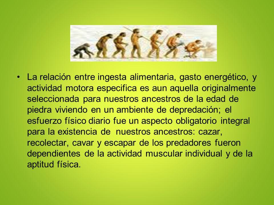 La relación entre ingesta alimentaria, gasto energético, y actividad motora especifica es aun aquella originalmente seleccionada para nuestros ancestr