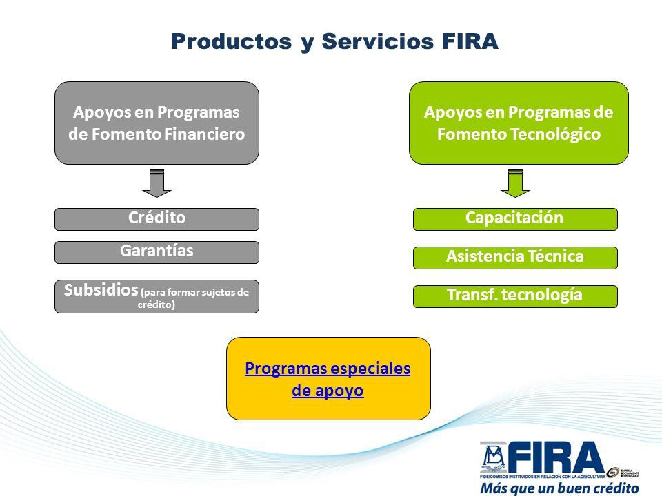 Productos y Servicios FIRA : Apoyos en Programas de Fomento Tecnológico Programas especiales de apoyo Capacitación Asistencia Técnica Transf. tecnolog