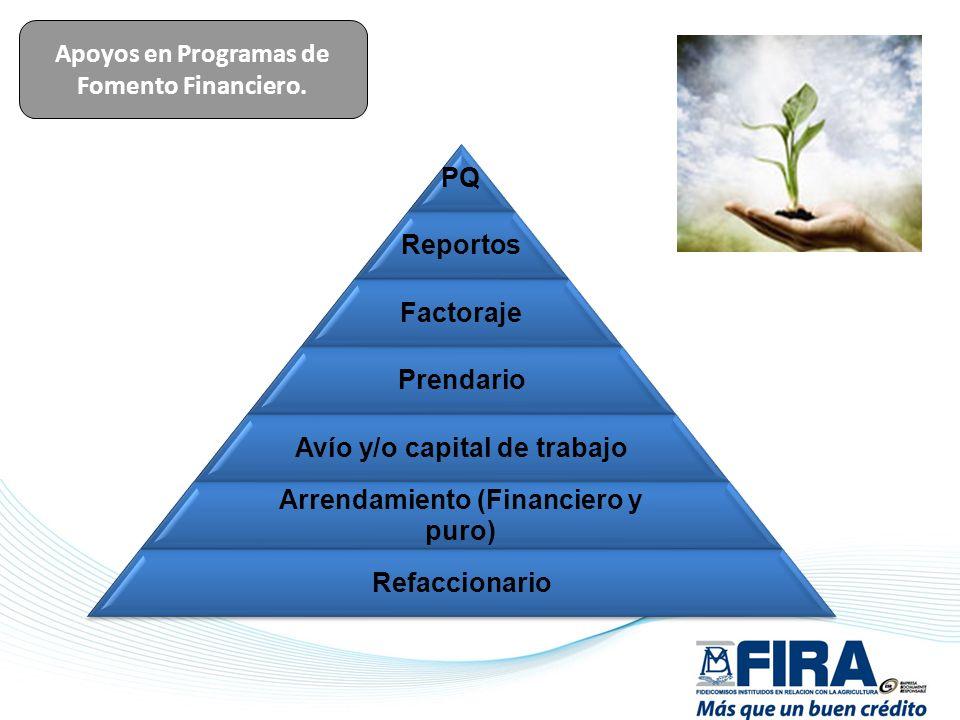 Apoyos en Programas de Fomento Financiero. PQ Reportos Factoraje Prendario Avío y/o capital de trabajo Arrendamiento (Financiero y puro) Refaccionario