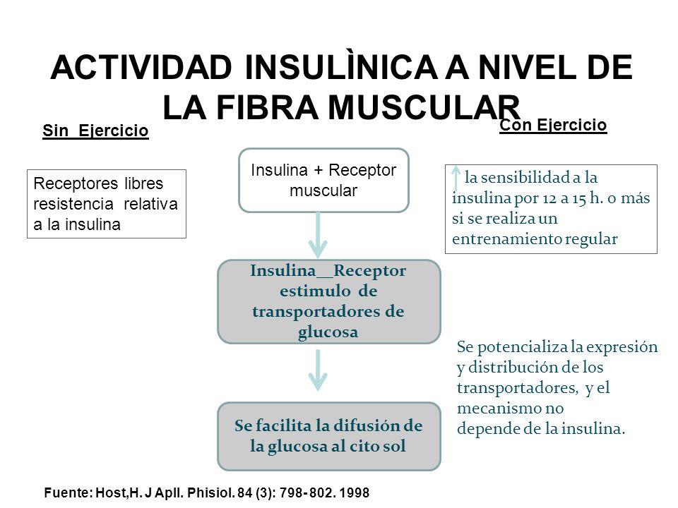 ACTIVIDAD INSULÌNICA A NIVEL DE LA FIBRA MUSCULAR Insulina + Receptor muscular Insulina__Receptor estimulo de transportadores de glucosa Se facilita l