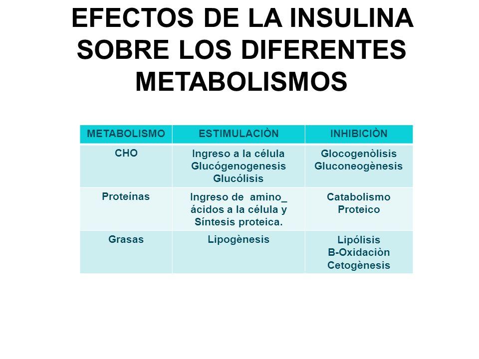 EFECTOS DE LA INSULINA SOBRE LOS DIFERENTES METABOLISMOS METABOLISMOESTIMULACIÒNINHIBICIÒN CHOIngreso a la célula Glucógenogenesis Glucólisis Glocogen