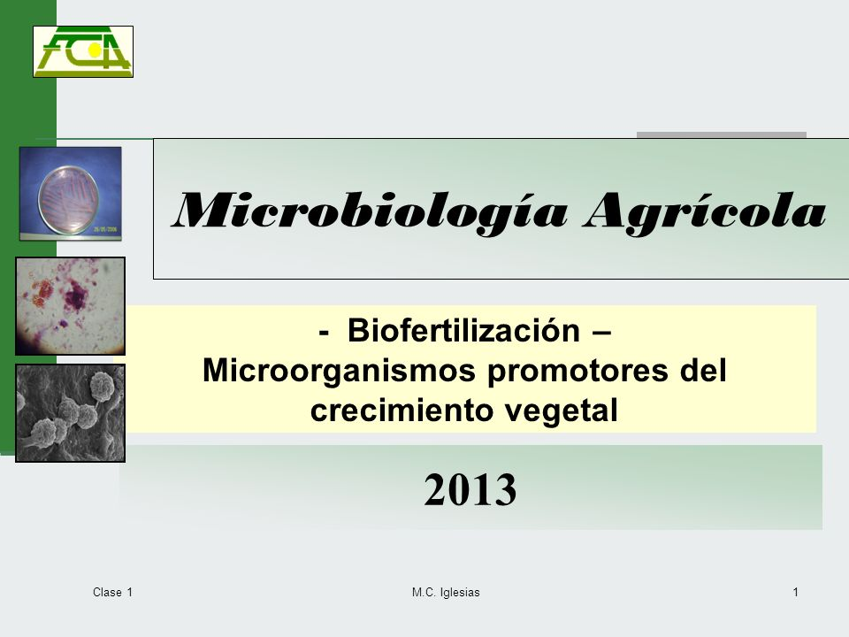 Clase 1 M.C. Iglesias1 Microbiología Agrícola 2013 - Biofertilización – Microorganismos promotores del crecimiento vegetal