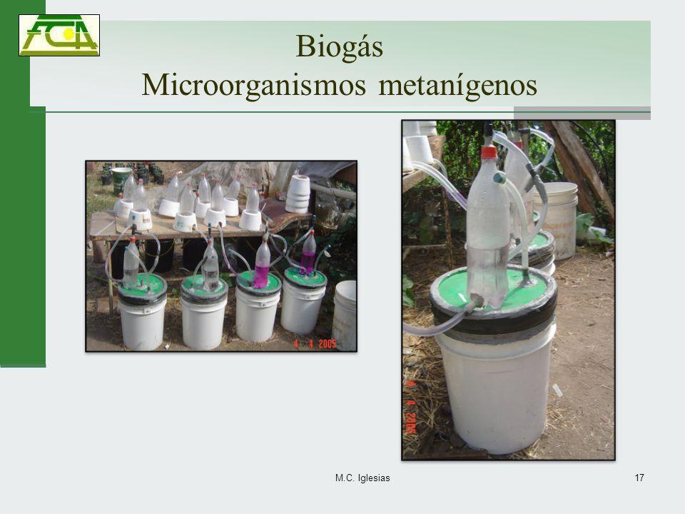 Biogás Microorganismos metanígenos M.C. Iglesias17