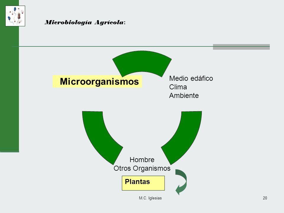M.C. Iglesias20 Microbiología Agrícola : Medio edáfico Clima Ambiente Hombre Otros Organismos Microorganismos Plantas