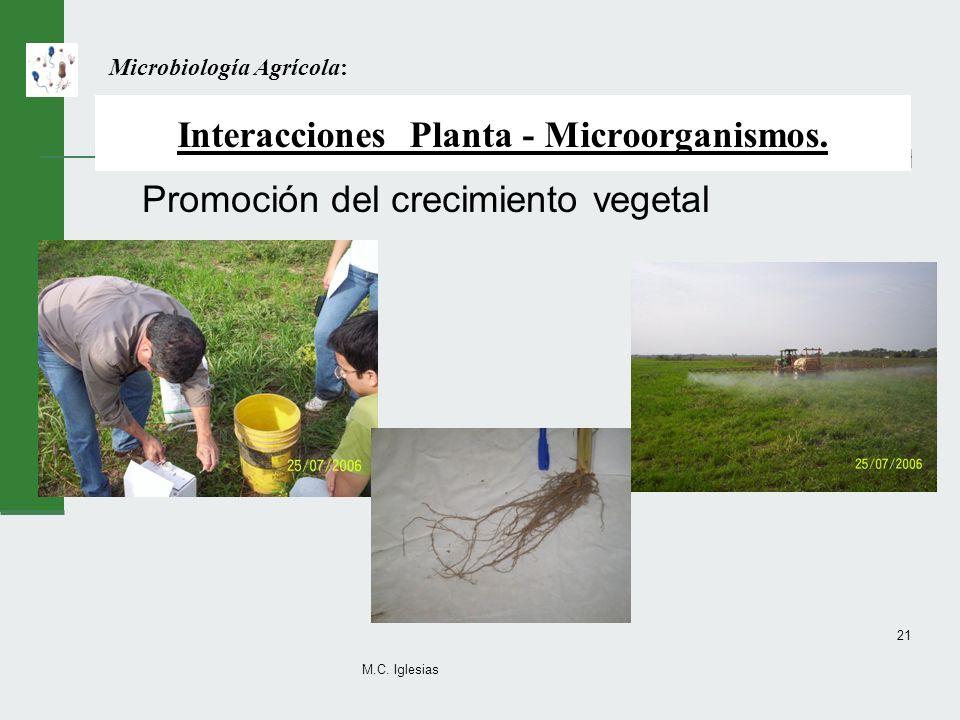M.C. Iglesias 21 Interacciones Planta - Microorganismos. Promoción del crecimiento vegetal Microbiología Agrícola: