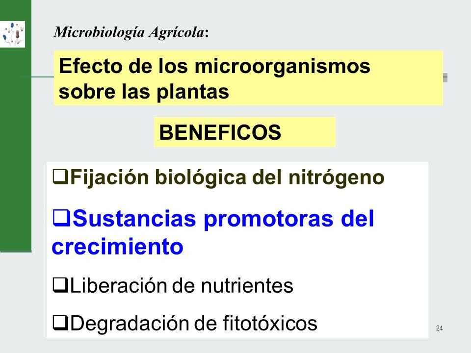 M.C. Iglesias24 Microbiología Agrícola: Efecto de los microorganismos sobre las plantas Fijación biológica del nitrógeno Sustancias promotoras del cre