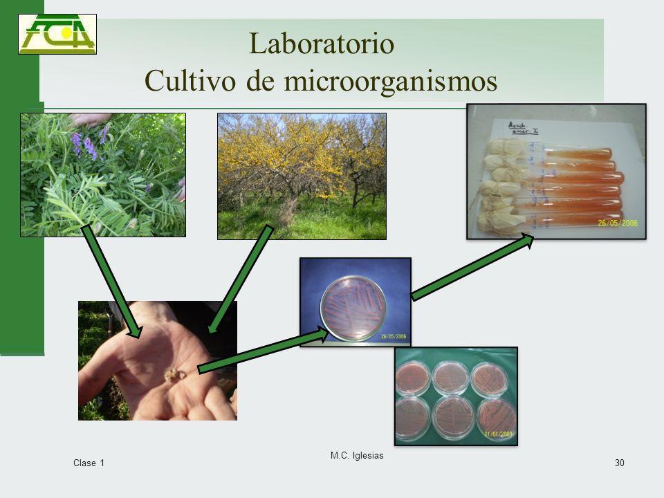 Laboratorio Cultivo de microorganismos Clase 1 M.C. Iglesias 30