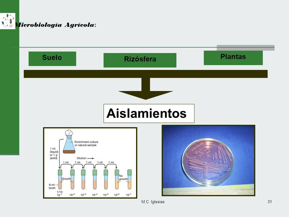 M.C. Iglesias31 Microbiología Agrícola : Aislamientos Suelo Plantas Rizósfera