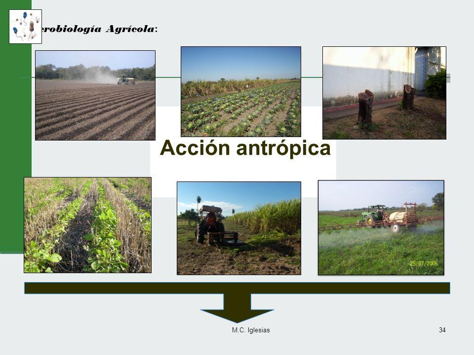 M.C. Iglesias34 Microbiología Agrícola : Acción antrópica