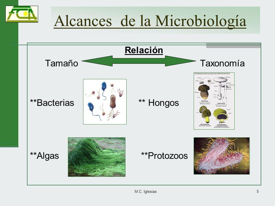 Alcances de la Microbiología Relación Tamaño Taxonomía **Bacterias ** Hongos **Algas **Protozoos M.C. Iglesias5