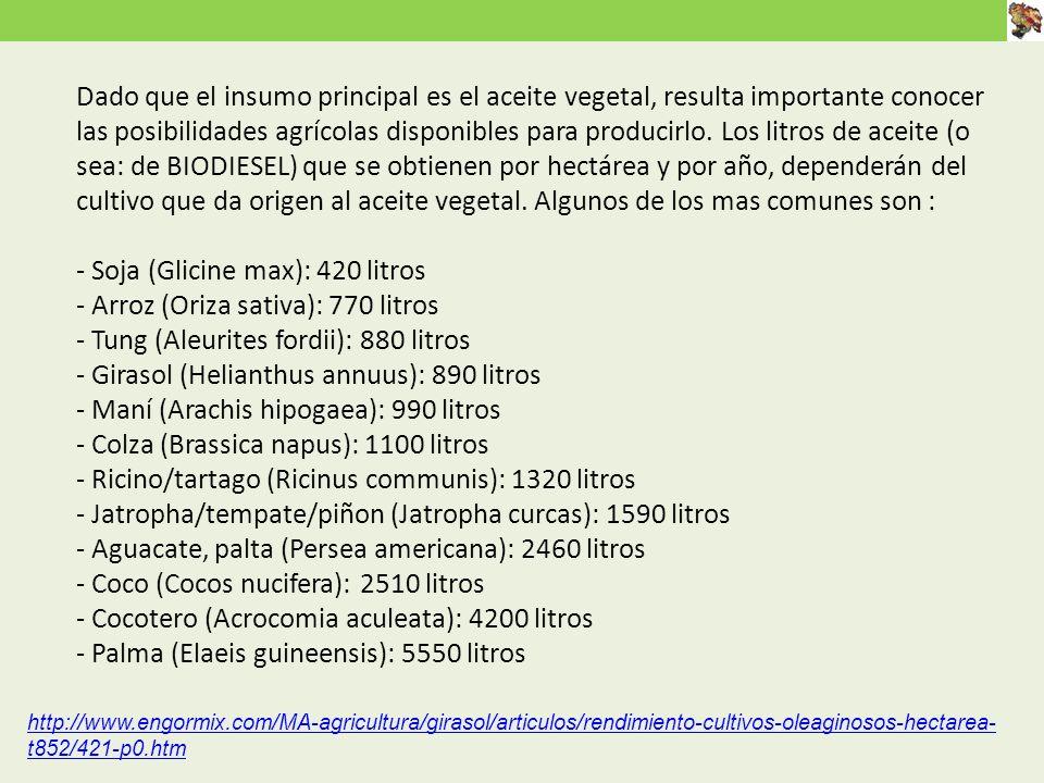 Dado que el insumo principal es el aceite vegetal, resulta importante conocer las posibilidades agrícolas disponibles para producirlo.