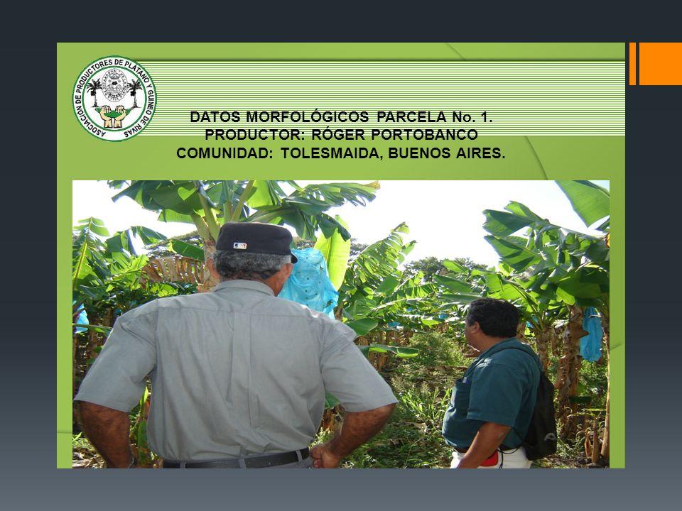 DATOS MORFOLÓGICOS PARCELA No. 1. PRODUCTOR: RÓGER PORTOBANCO COMUNIDAD: TOLESMAIDA, BUENOS AIRES.
