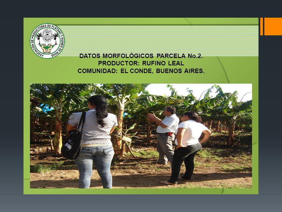 DATOS MORFOLÓGICOS PARCELA No.2. PRODUCTOR: RUFINO LEAL COMUNIDAD: EL CONDE, BUENOS AIRES.