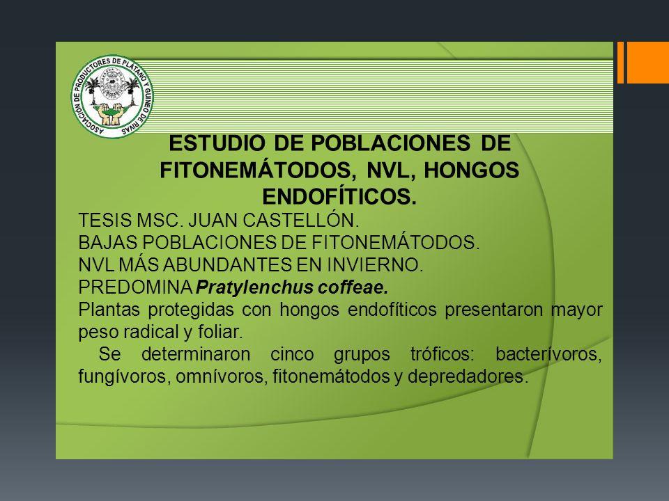 ESTUDIO DE POBLACIONES DE FITONEMÁTODOS, NVL, HONGOS ENDOFÍTICOS. TESIS MSC. JUAN CASTELLÓN. BAJAS POBLACIONES DE FITONEMÁTODOS. NVL MÁS ABUNDANTES EN