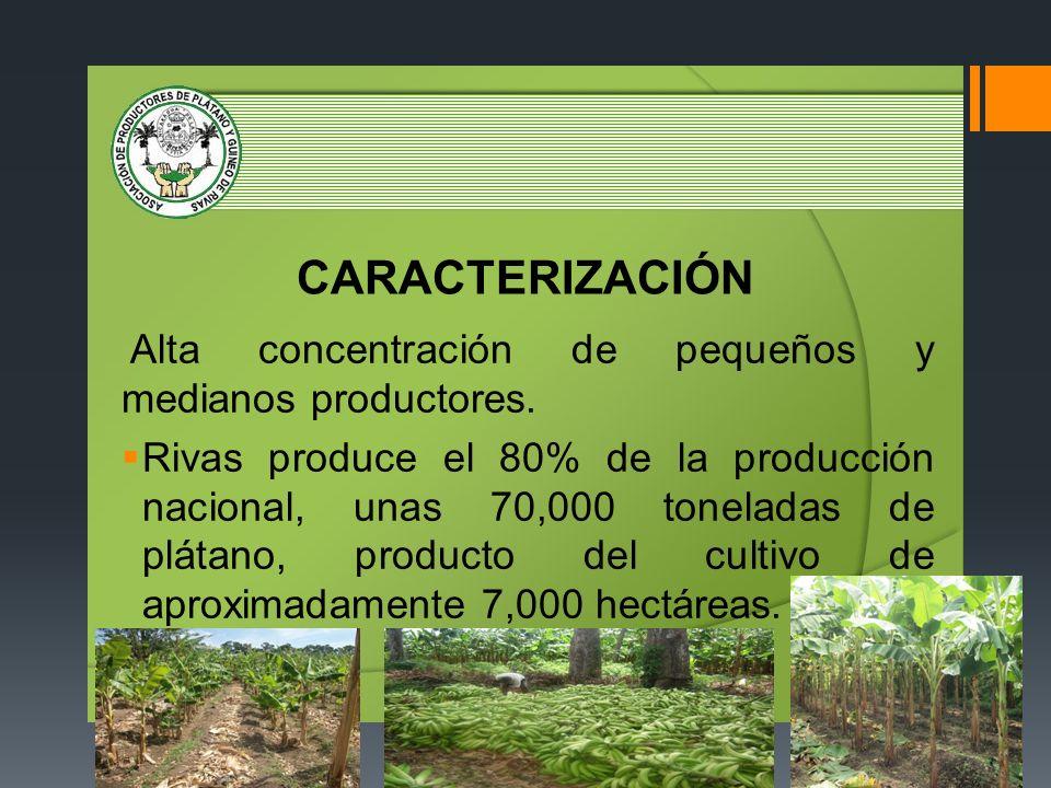 CARACTERIZACIÓN Alta concentración de pequeños y medianos productores. Rivas produce el 80% de la producción nacional, unas 70,000 toneladas de plátan