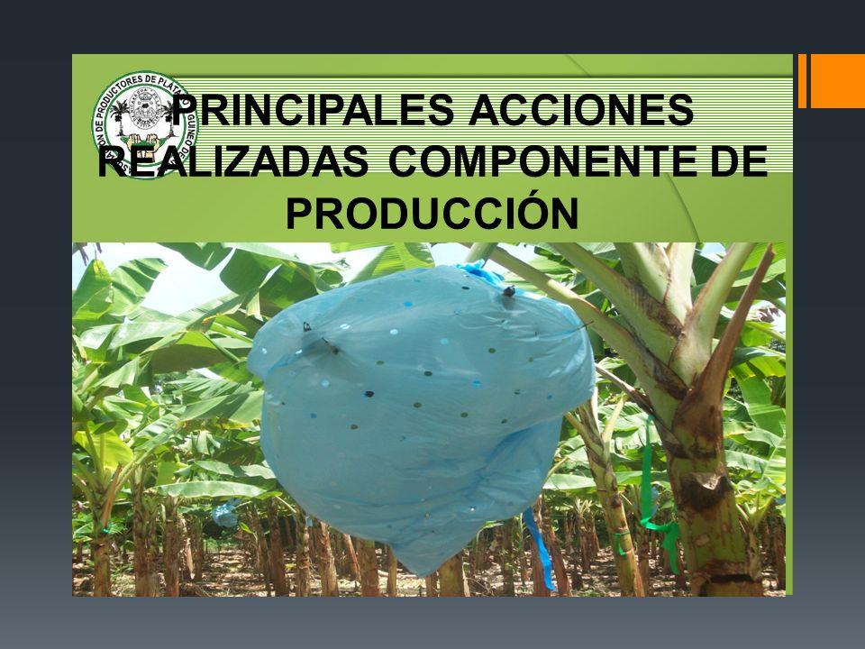 EVALUACIÓN DEL PARQUE AGROINDUSTRIAL Agroindustria basada en ventas callejeras (fritangas), producto del sub – empleo, sin requerimientos de infraestructura ni preparación técnica.