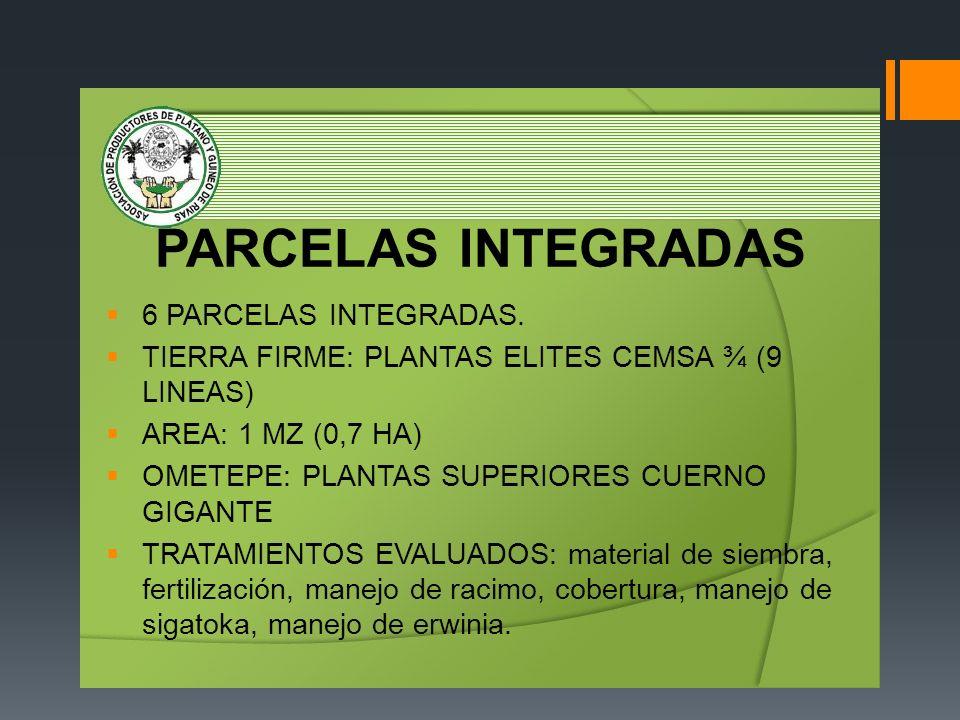 CRITERIOS DE SELECCIÓN PLANTAS SUPERIORES: Proceso participativo, 28 productores, racimos con más de 40 frutos.
